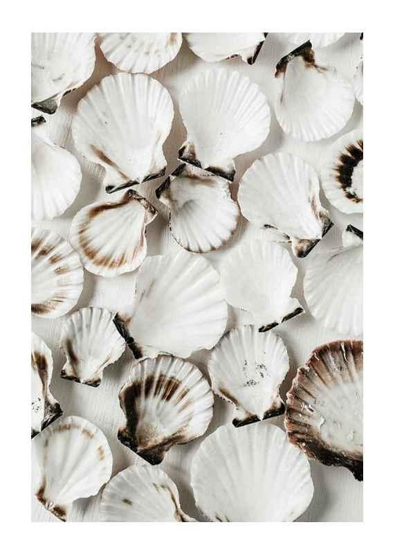Sea Shells-1
