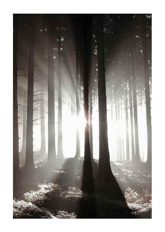 Misty Autumn Morning-1