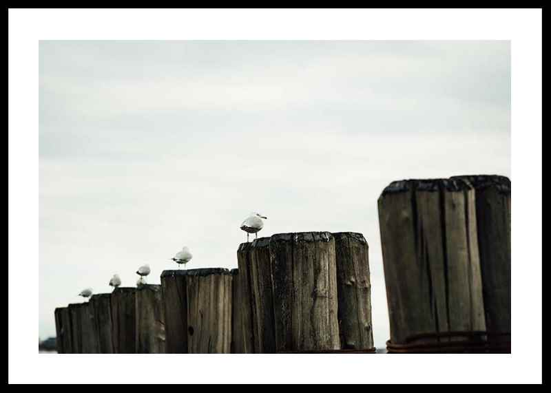 Seagulls Harbor