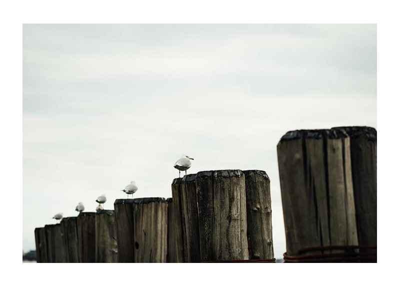 Seagulls Harbor-1