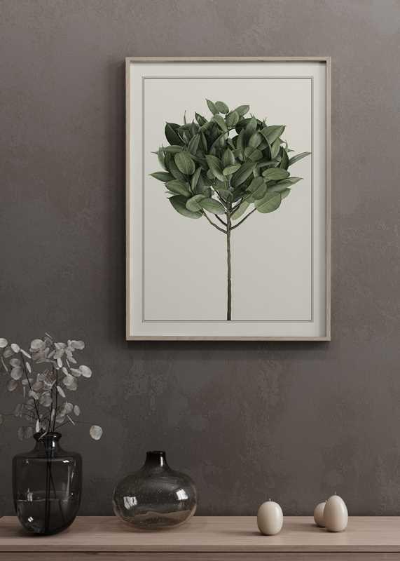 Ficus Elastica-2