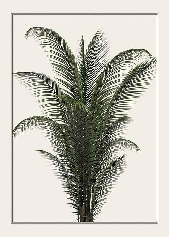 Palm Tree-1