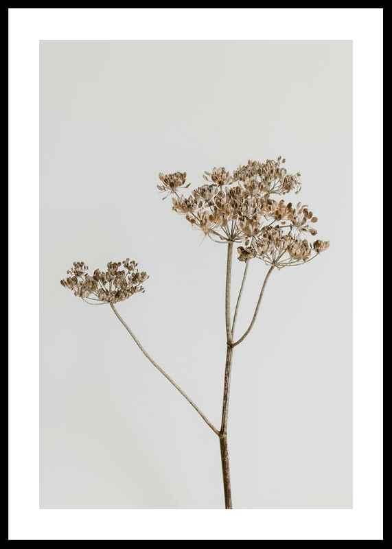 Single Dried Flower