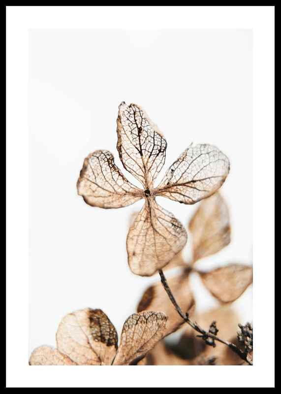 Four Leaves Plant