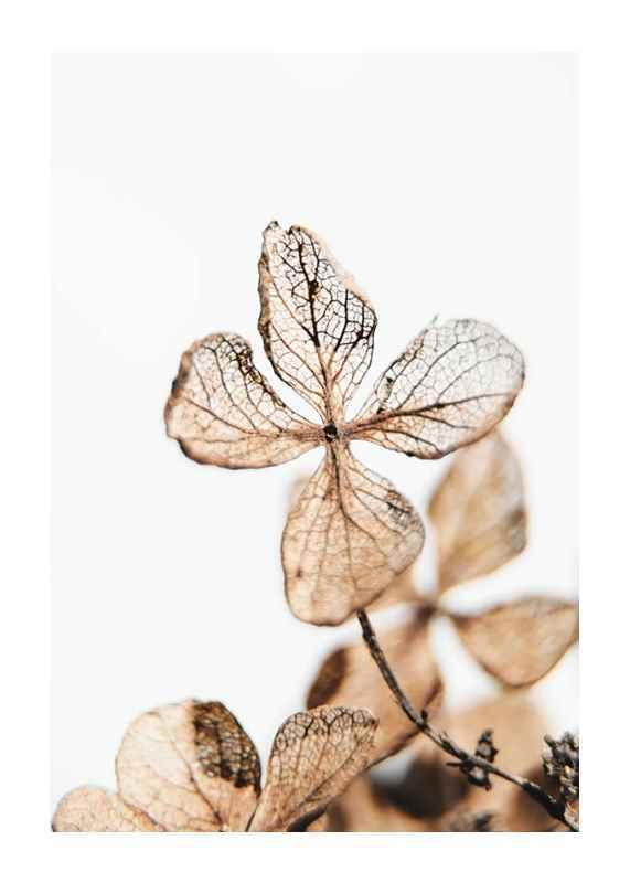 Four Leaves Plant-1
