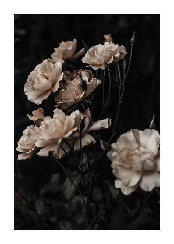 Dark White Roses-1