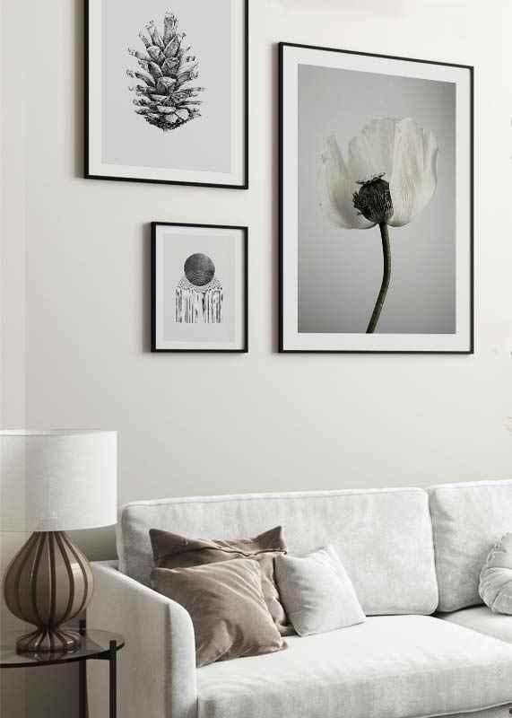 White Poppy-4