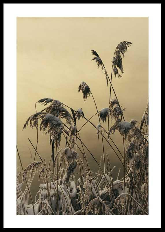 Winter Reed No2-0