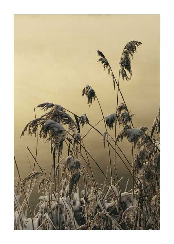 Winter Reed No2-1