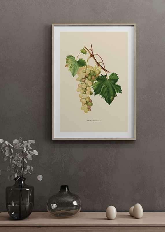 White Grapes-4