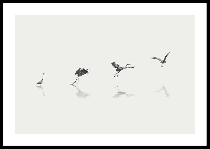 Bird Taking Off-0