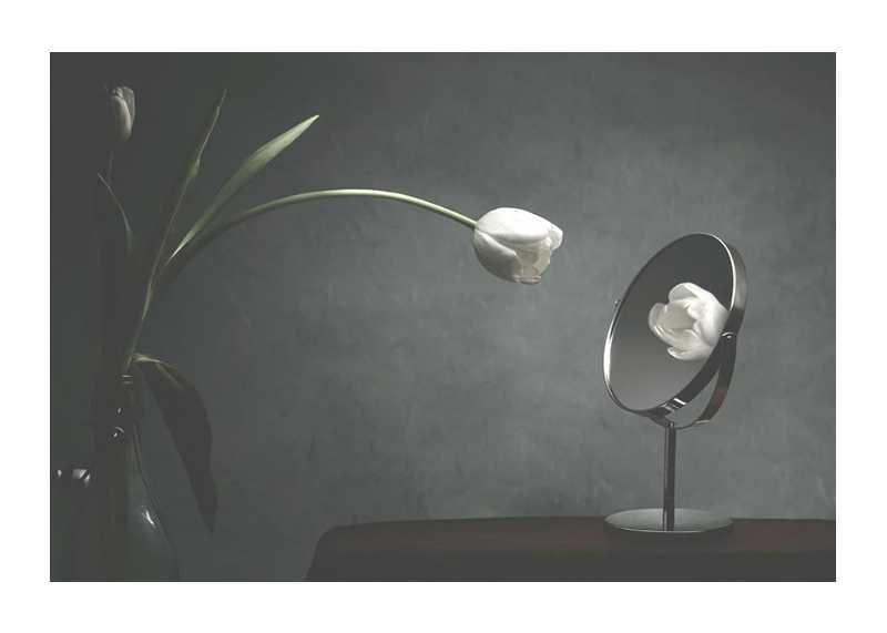 Vanity Tulip-1