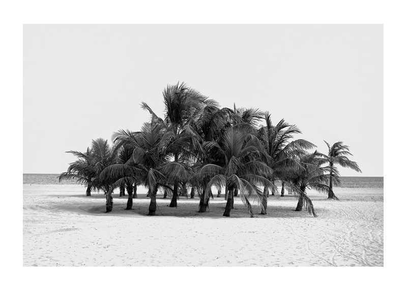 Group Of Palms-1