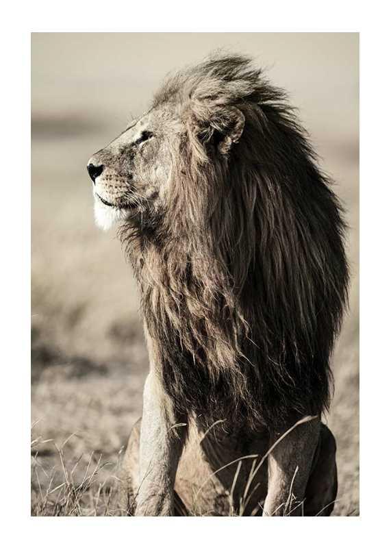 Lion In Profile-1
