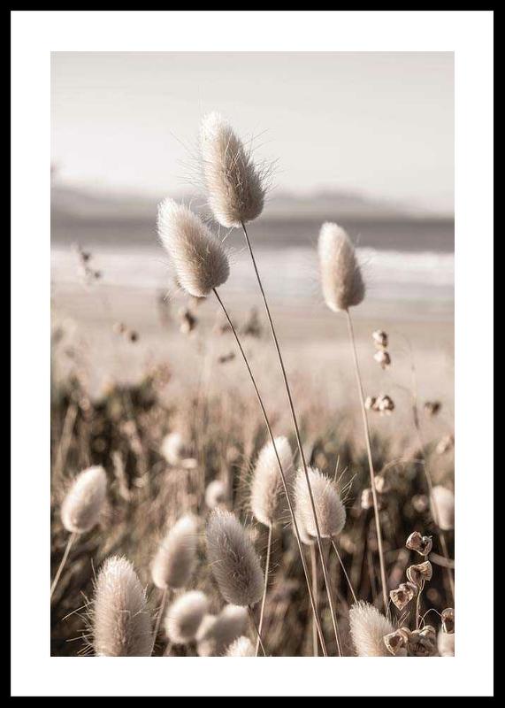 Soft Grass