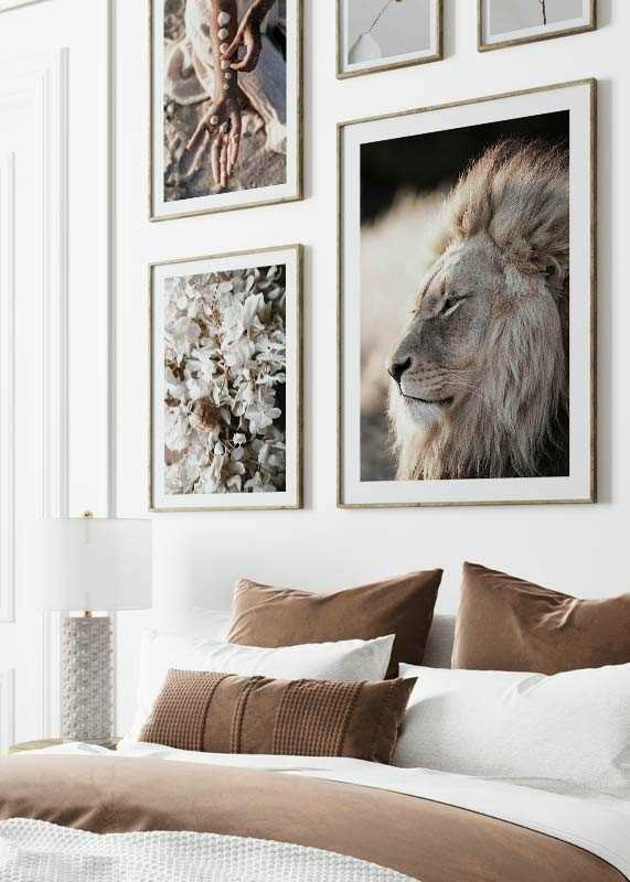Male African Lion-4