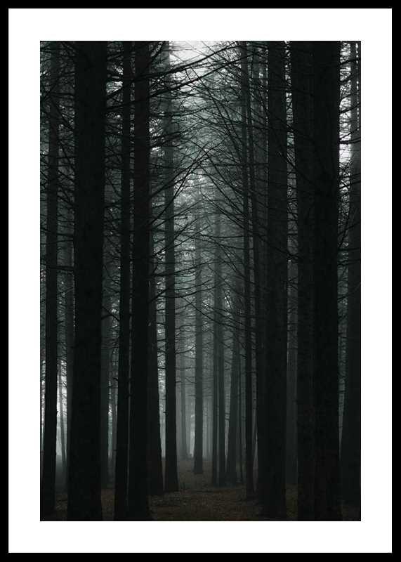 Dark Forest-0