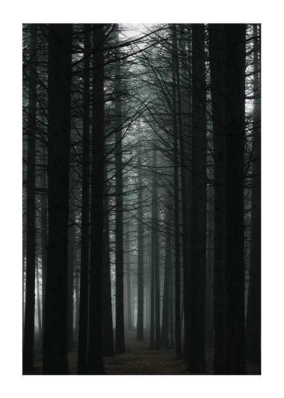 Dark Forest-1