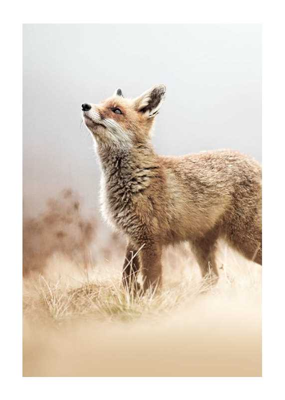 Fox On The Hunt-1