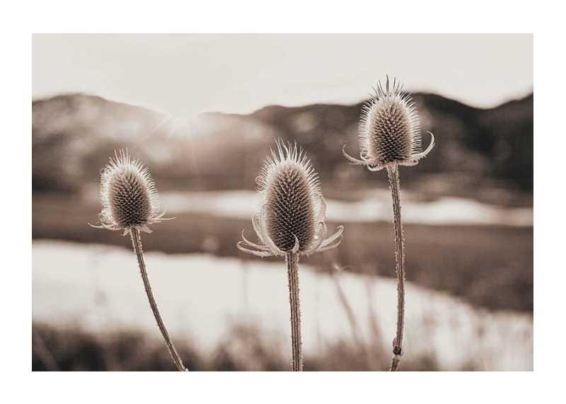 Flowers In Meadow-1
