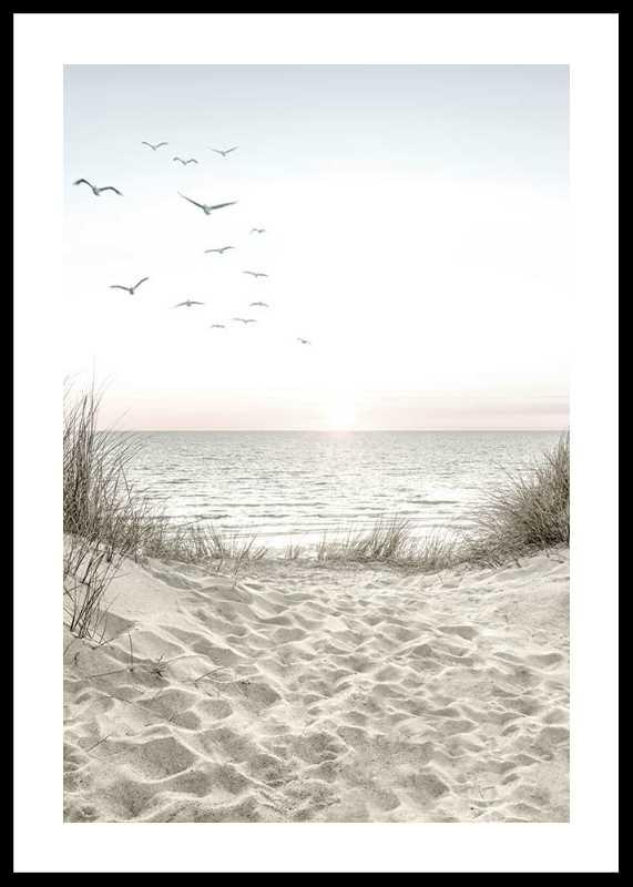 Seagulls Sandy Beach-0