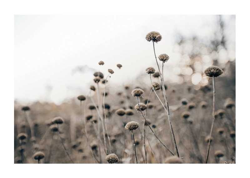 Monochromatic Flowers-1