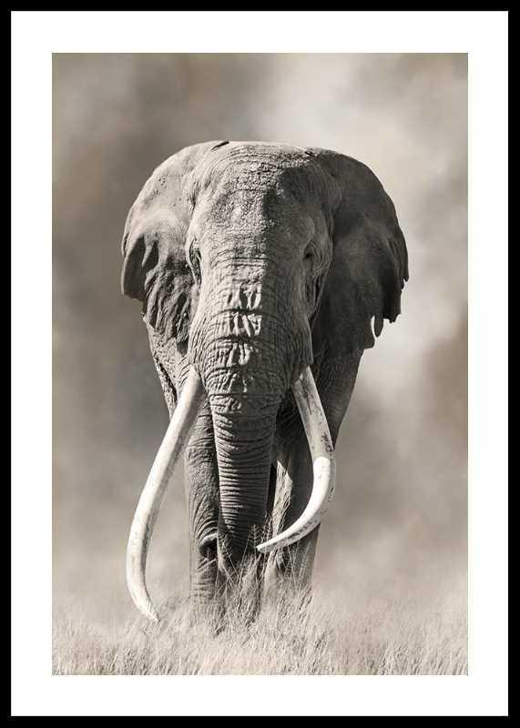 Elephant Tusks-0