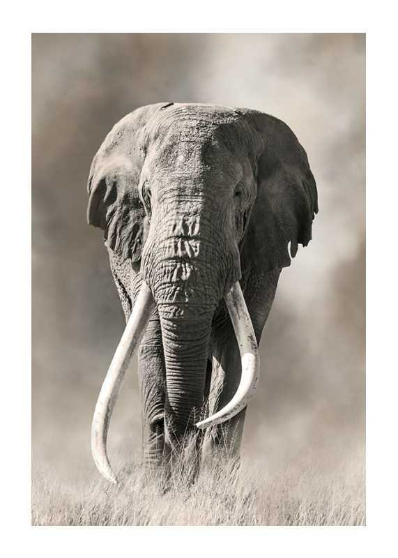 Elephant Tusks-1
