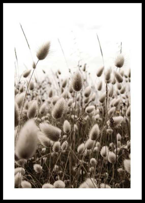 Reeds Field-0