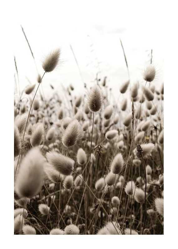 Reeds Field-1