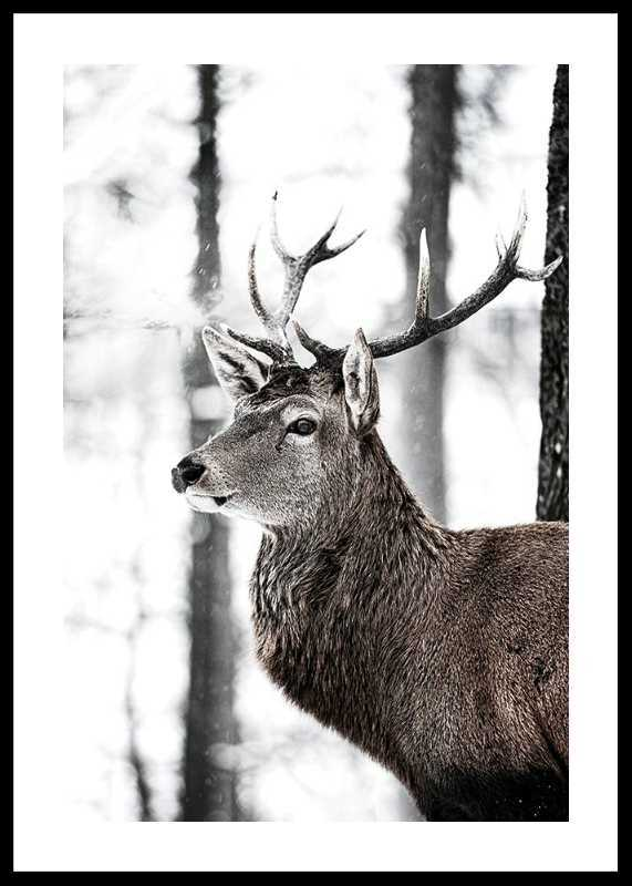 Stag In Forest-0