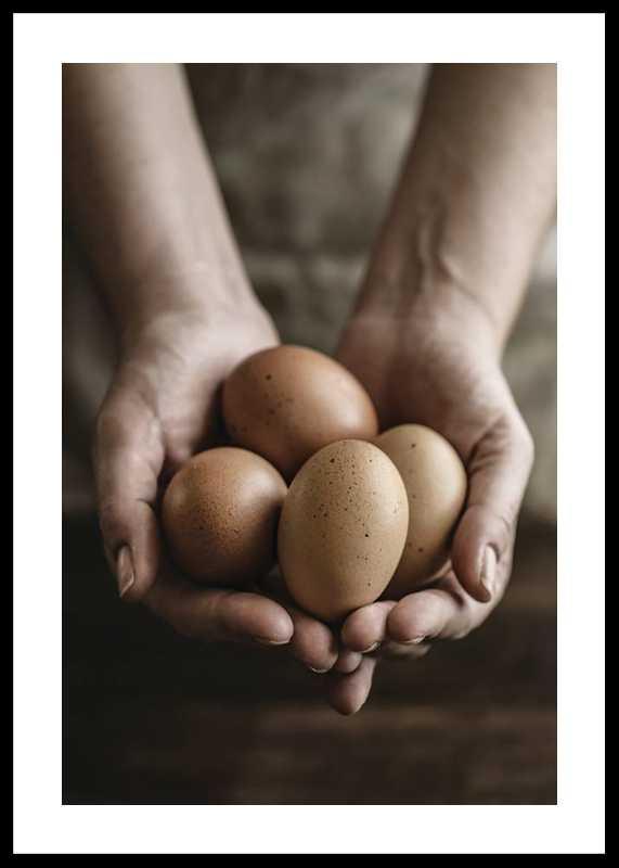 Free Range Eggs-0