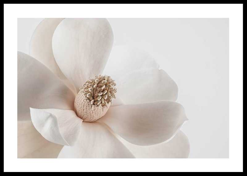 Beige Magnolia No1