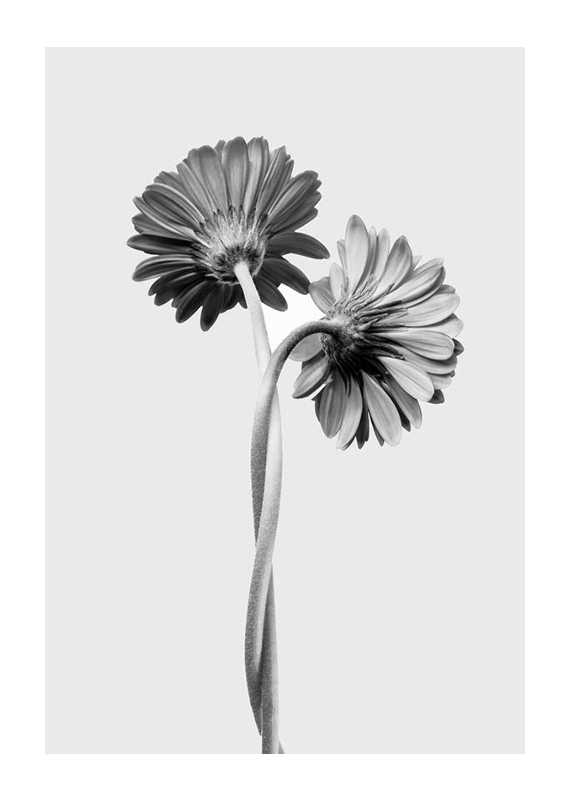 Daisies Intertwined-1