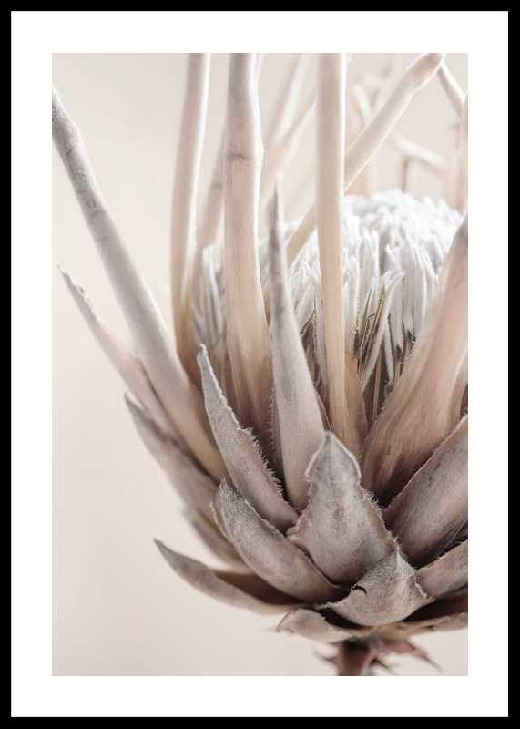 Protea Flower No2