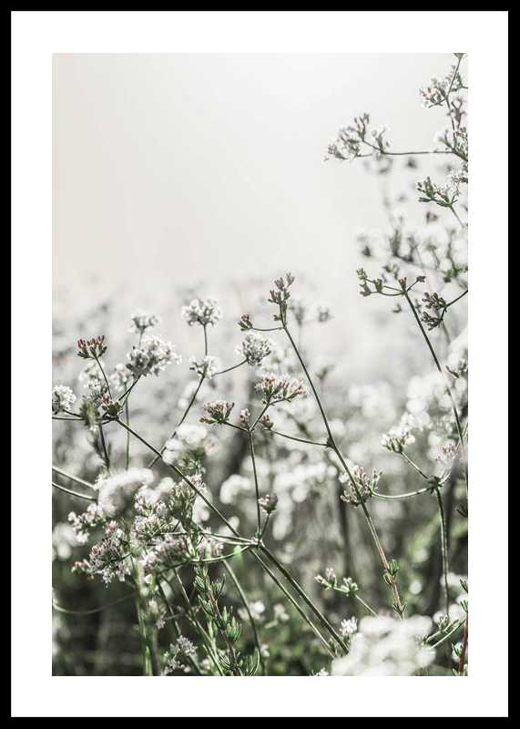 White Flowers In Spring-0