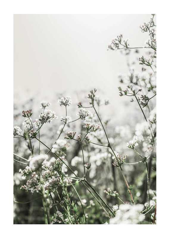White Flowers In Spring-1