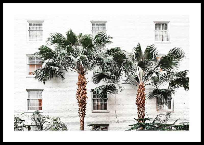 City Palms