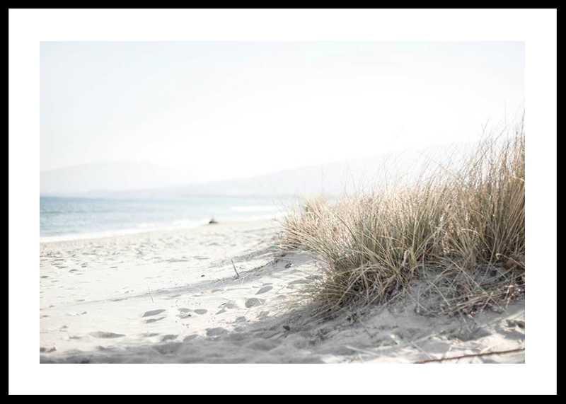 Marram Grass At Beach-0