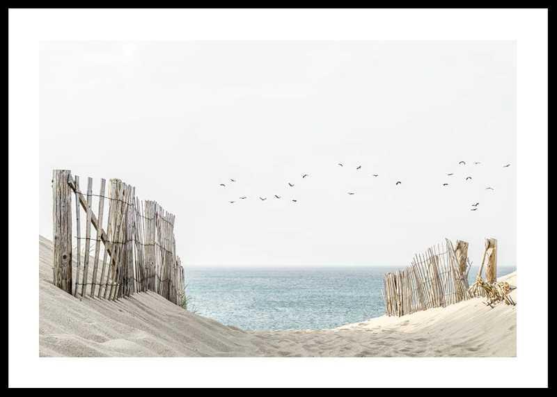 Birds At Cape Cod