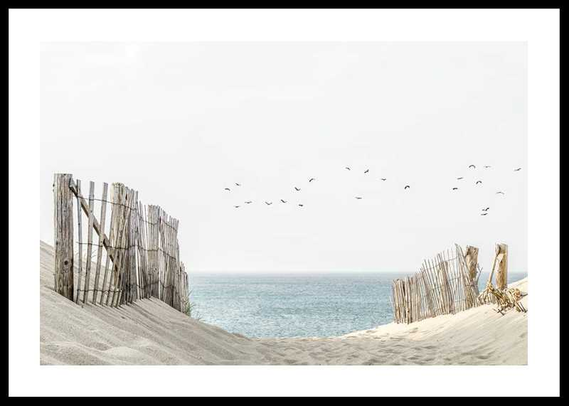 Birds At Cape Cod-0