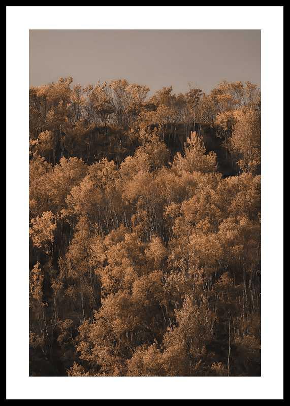 Autumn Colored