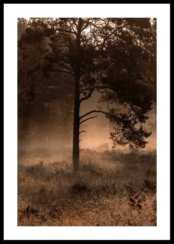 Field In Fog-0